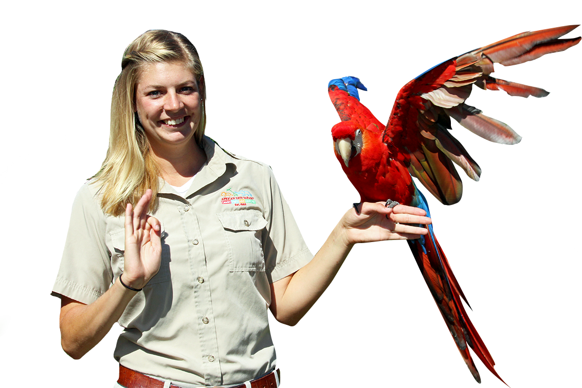 Trainer holding scarlet macaw