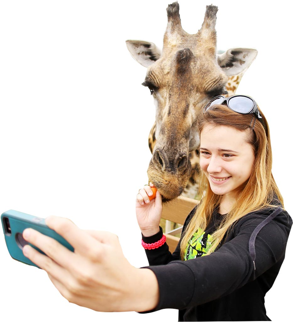 girl taking selfie while feeding giraffe a carrot