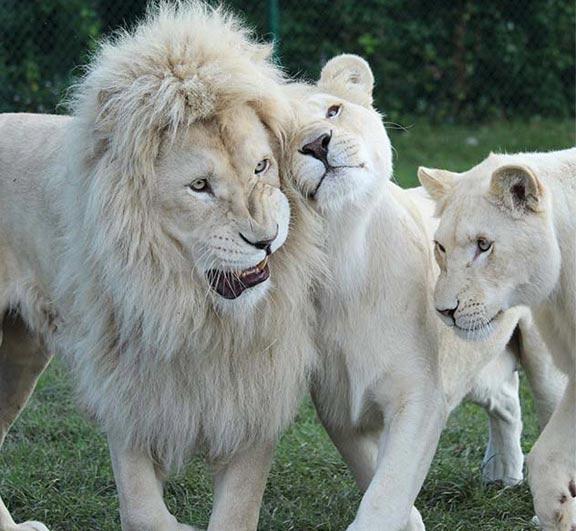 Animals African Lion Safari Cambridge Ontario