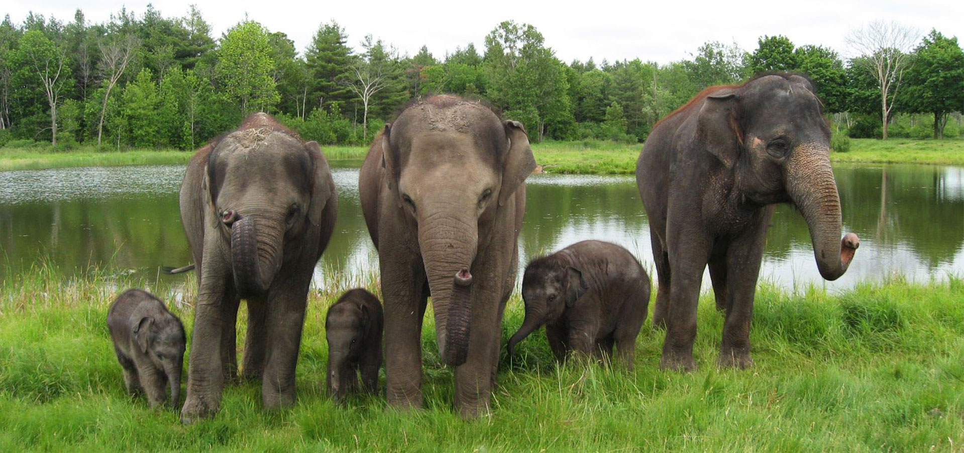 elephants and their young in front of water