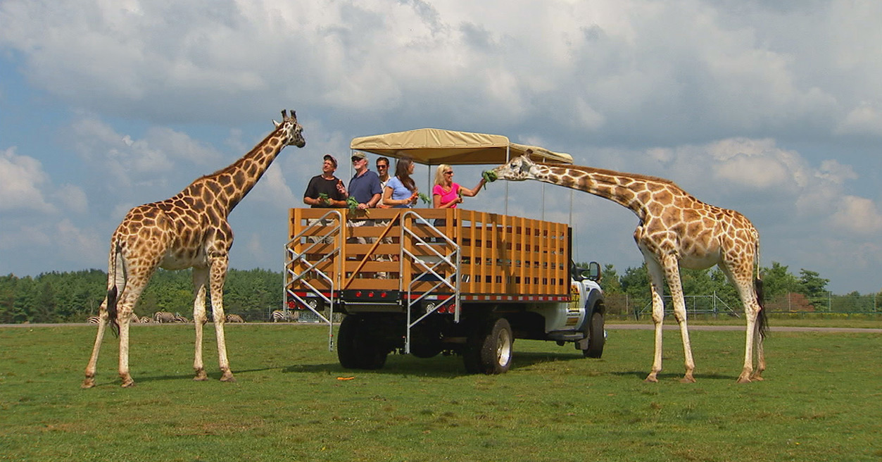 group feeding giraffe during wake up the wild tour