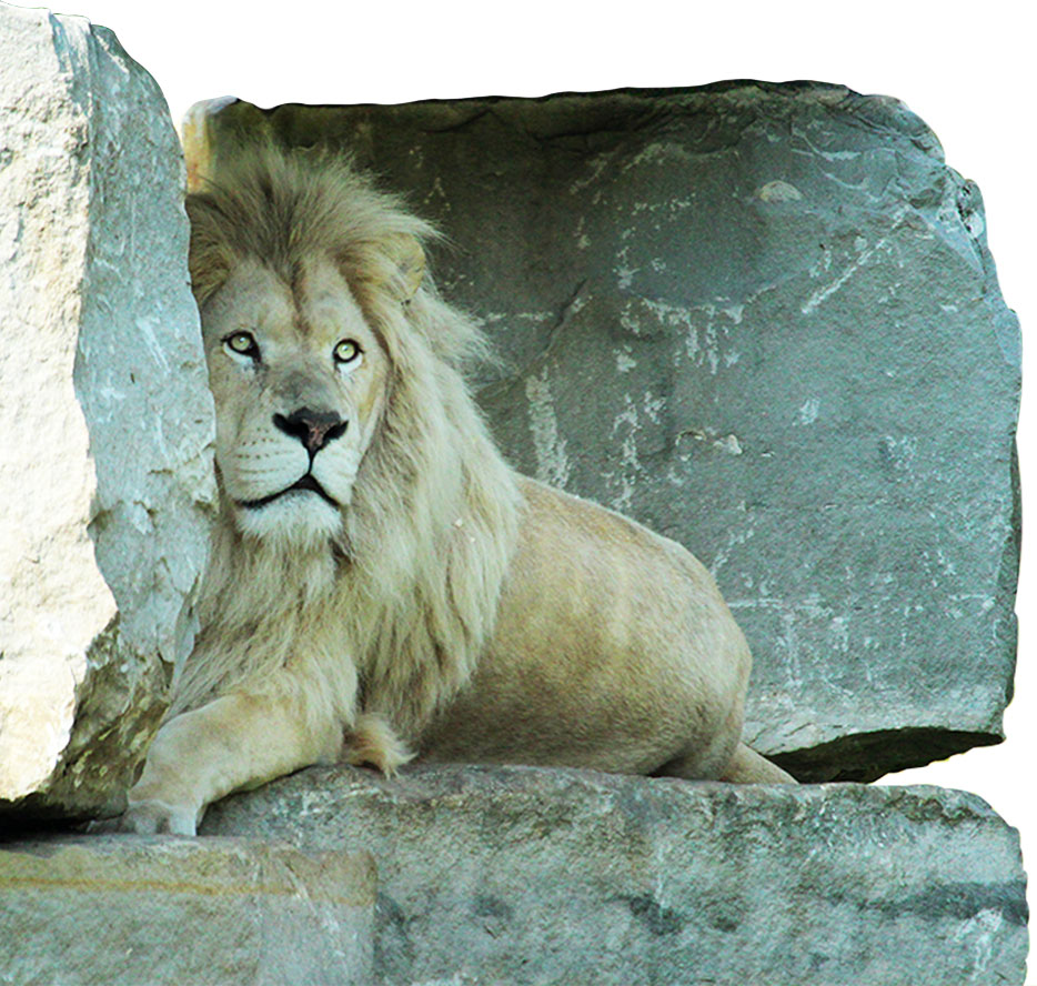 School Visits African Lion Safari Cambridge Ontario