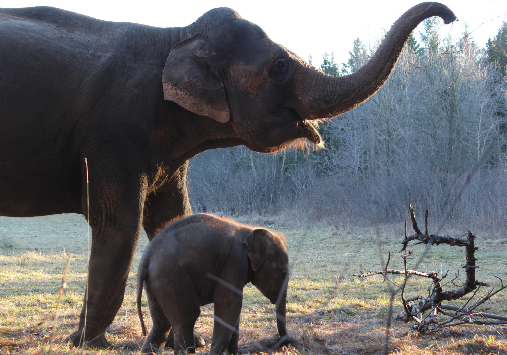 Asian Elephant Conservation programme!